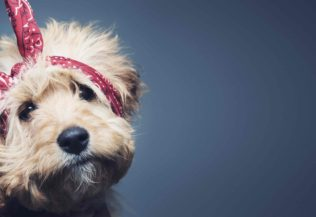 10 tips for keeping pets cool this summer